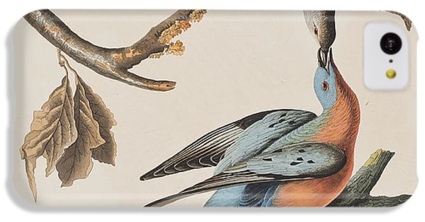 Passenger Pigeon IPhone 5c Case by John James Audubon