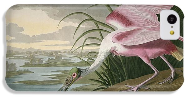 Roseate Spoonbill IPhone 5c Case by Anton Oreshkin