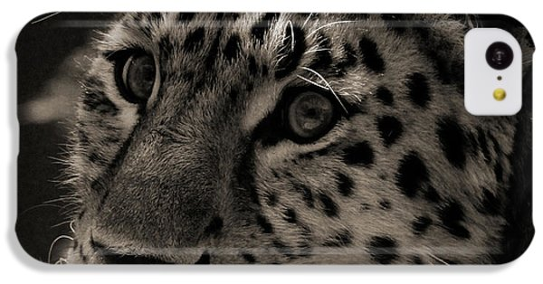 Amur Leopard IPhone 5c Case by Martin Newman