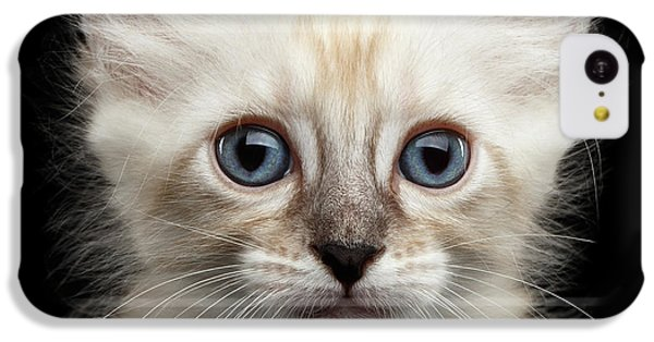 Cat iPhone 5c Case - Cute American Curl Kitten With Twisted Ears Isolated Black Background by Sergey Taran