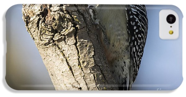Red-bellied Woodpecker IPhone 5c Case