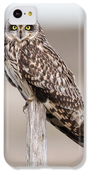 Short Eared Owl IPhone 5c Case