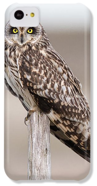 Short Eared Owl IPhone 5c Case by Ian Hufton