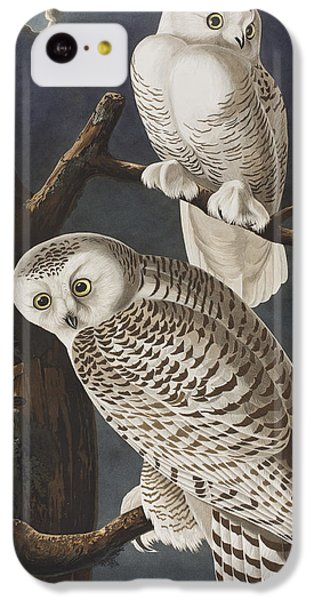 Snowy Owl IPhone 5c Case