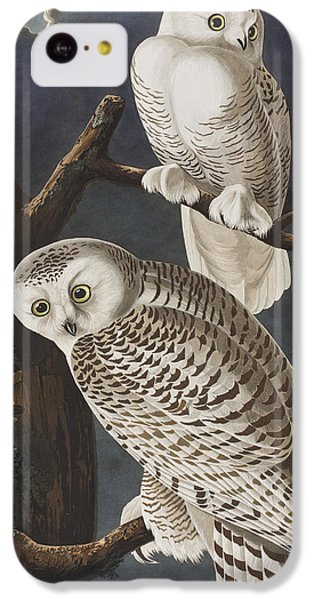 Snowy Owl IPhone 5c Case by John James Audubon