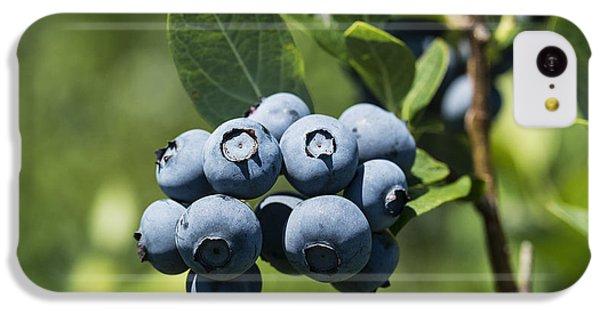 Blueberry Bush IPhone 5c Case