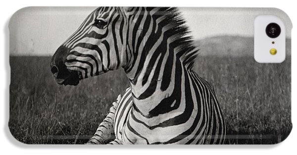 A Burchells Zebra At Rest IPhone 5c Case