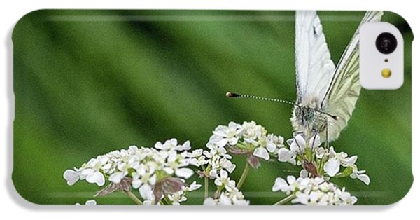 iPhone 5c Case - A Green-veined White (pieris Napi) by John Edwards