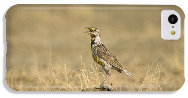 A Juvenile Western Meadowlark IPhone 5c Case