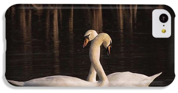 A Painting Of A Pair Of Mute Swans IPhone 5c Case by John Edwards