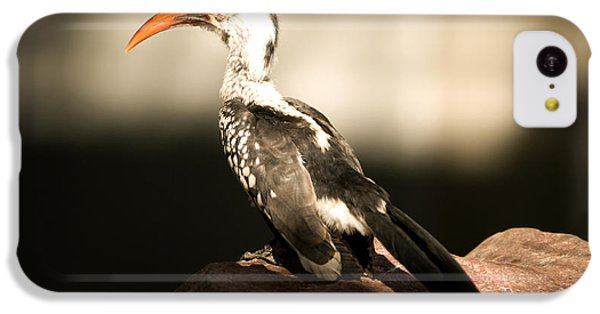 A Red-billed Hornbill At The Lincoln IPhone 5c Case