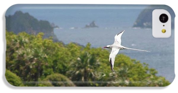 iPhone 5c Case - A Red-billed Tropicbird (phaethon by John Edwards