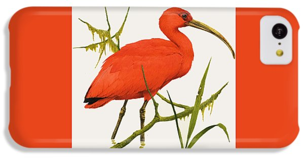 A Scarlet Ibis From South America IPhone 5c Case