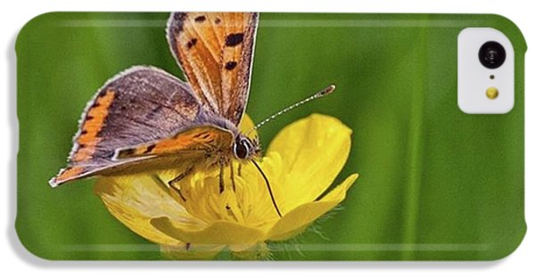 iPhone 5c Case - A Small Copper Butterfly (lycaena by John Edwards