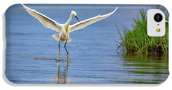 A Snowy Egret Dip-fishing IPhone 5c Case