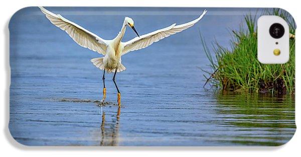 A Snowy Egret Dip-fishing IPhone 5c Case by Rick Berk