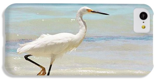 iPhone 5c Case - A Snowy Egret (egretta Thula) At Mahoe by John Edwards