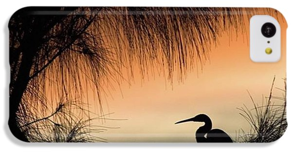 A Snowy Egret (egretta Thula) Settling IPhone 5c Case