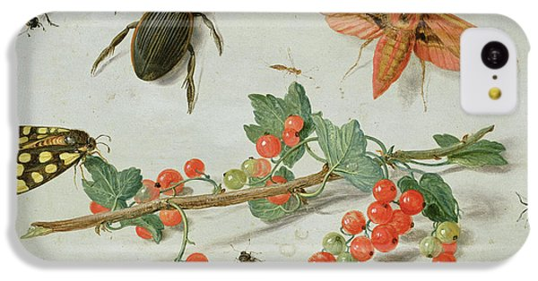 A Sprig Of Redcurrants With An Elephant Hawk Moth, A Magpie Moth And Other Insects, 1657 IPhone 5c Case
