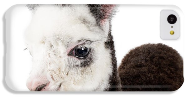 Adorable Baby Alpaca Cuteness IPhone 5c Case