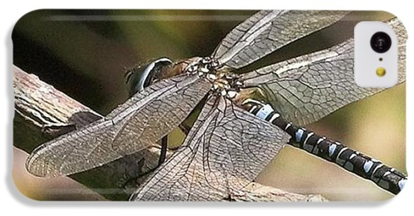 iPhone 5c Case - Aeshna Juncea - Common Hawker Taken At by John Edwards