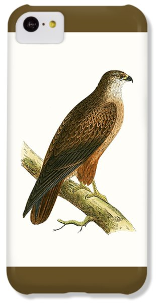 Buzzard iPhone 5c Case - African Buzzard by English School