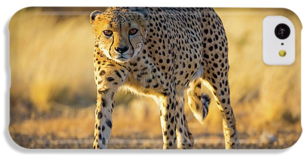 African Cheetah IPhone 5c Case
