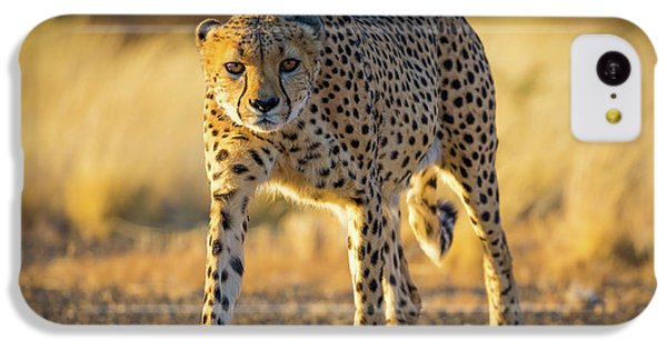 African Cheetah IPhone 5c Case by Inge Johnsson