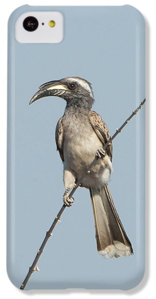 Hornbill iPhone 5c Case - African Grey Hornbill Tockus Nasutus by Panoramic Images