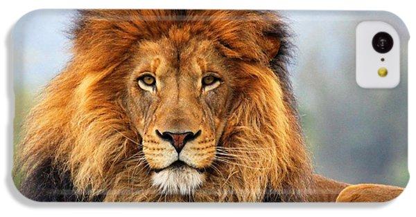 African Lion 1 IPhone 5c Case