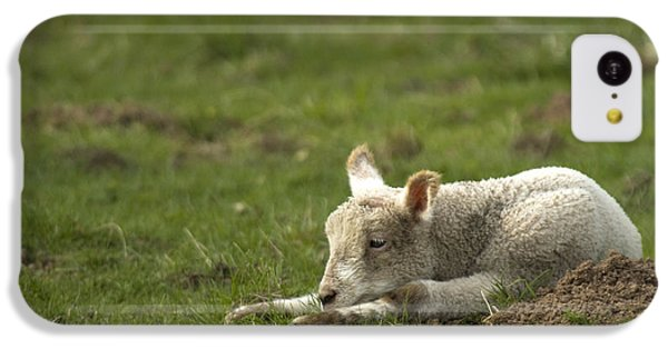 Sheep iPhone 5c Case - Afternoon Nap by Angel Ciesniarska