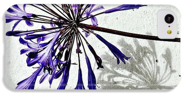 iPhone 5c Case - Agapanthus by Julie Gebhardt