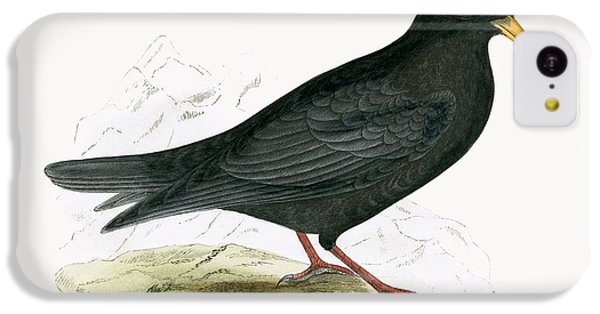 Alpine Chough IPhone 5c Case by English School