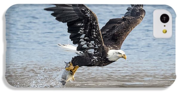 American Bald Eagle Taking Off IPhone 5c Case