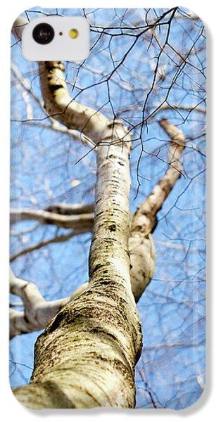 American Beech Tree IPhone 5c Case by Christina Rollo