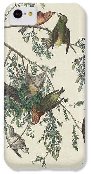 American Crossbill IPhone 5c Case