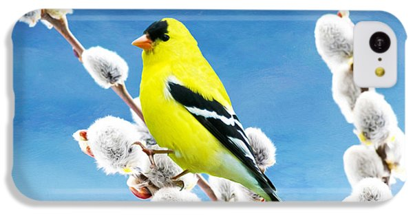 Finch iPhone 5c Case - American Goldfinch Perched On Pussy Willow by Laura D Young