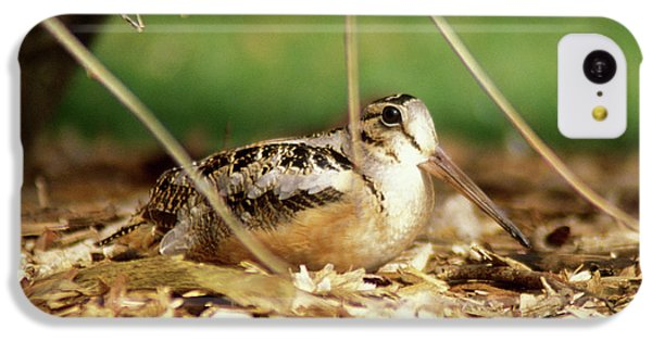 American Woodcock IPhone 5c Case by John Burk