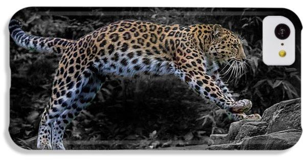 Amur Leopard On The Hunt IPhone 5c Case