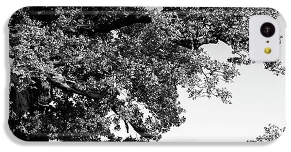 Ancient Oak, Bradgate Park IPhone 5c Case