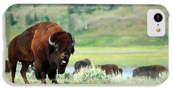 Angry Buffalo IPhone 5c Case by Todd Klassy
