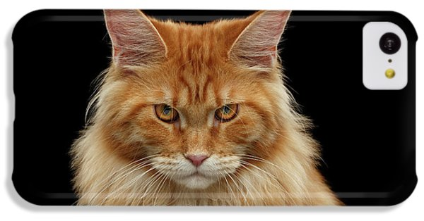 Cat iPhone 5c Case - Angry Ginger Maine Coon Cat Gazing On Black Background by Sergey Taran