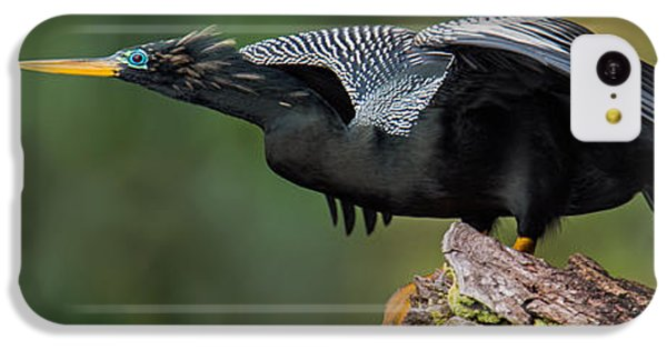 Anhinga iPhone 5c Case - Anhinga Anhinga Anhinga, Costa Rica by Panoramic Images