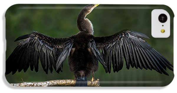 Anhinga iPhone 5c Case - Anhinga Anhinga Anhinga Perching by Panoramic Images