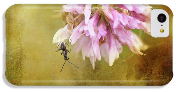 Ant iPhone 5c Case - Ant Acrobatics by Susan Capuano
