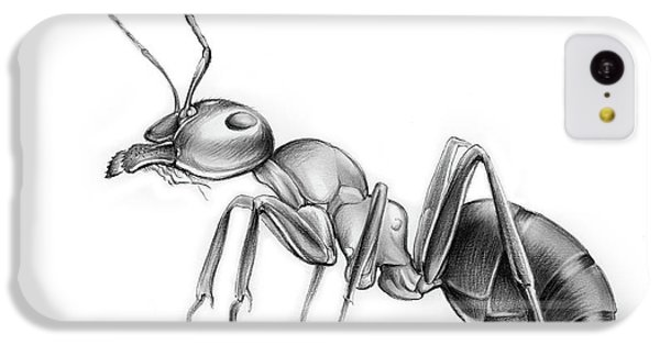 Ant iPhone 5c Case - Ant by Greg Joens