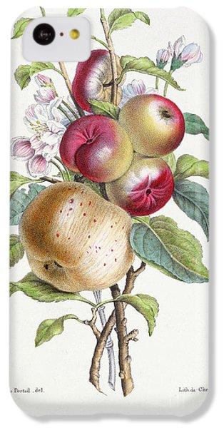 Apple Tree IPhone 5c Case by JB Pointel du Portail