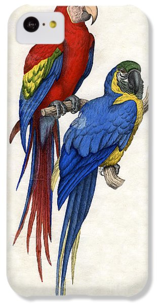 Aracangua And Blue And Yellow Macaw IPhone 5c Case