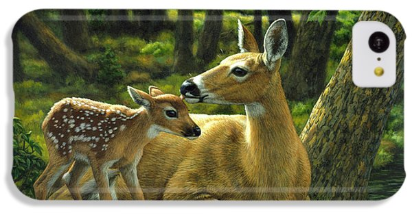Deer iPhone 5c Case - Whitetail Deer - First Spring by Crista Forest