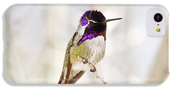 Humming Bird iPhone 5c Case - Hummingbird by Rebecca Margraf